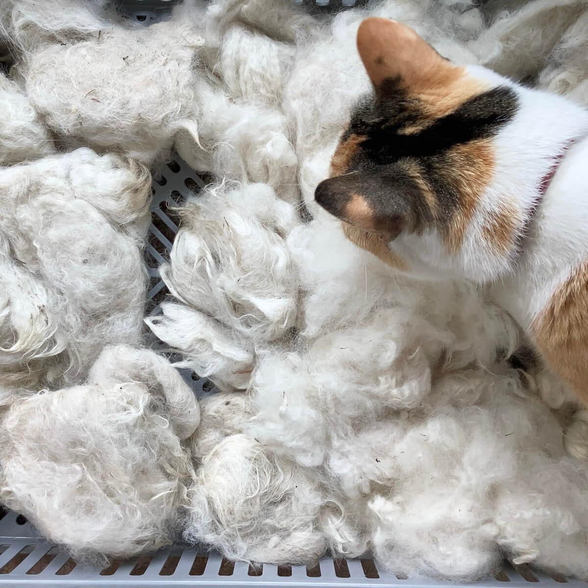 Drying the fiber